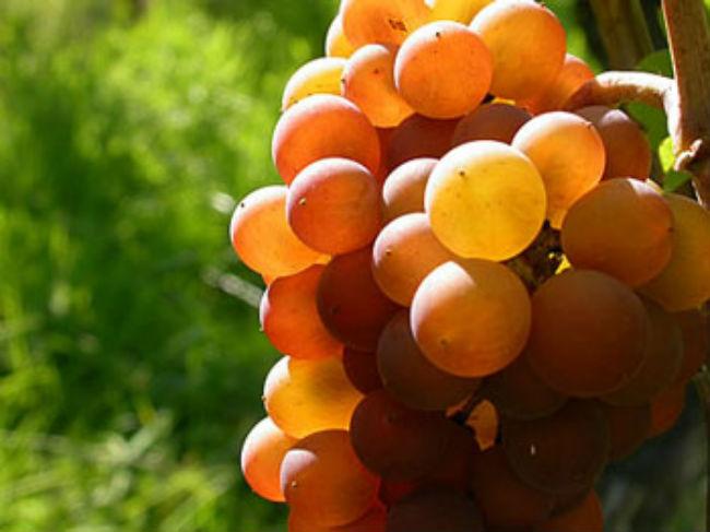 En su mayoría, los vinos alsacianos son blancos y tienen la denominación de origen. // Foto: Especial.