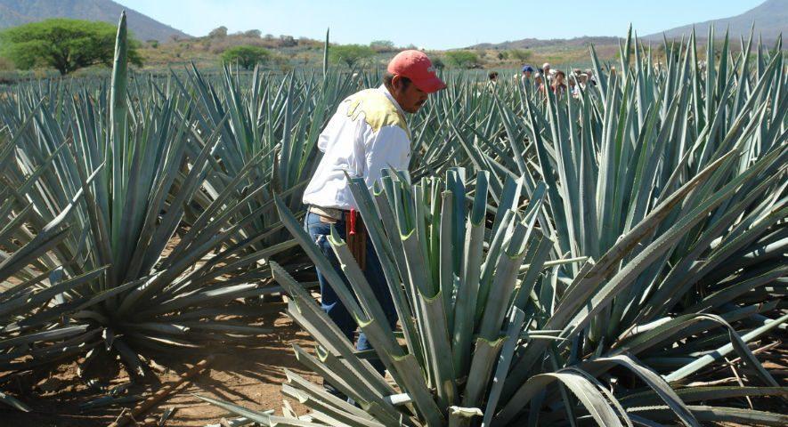 En Oaxaca se reforzará el programa Sembrando Vida, anuncia AMLO