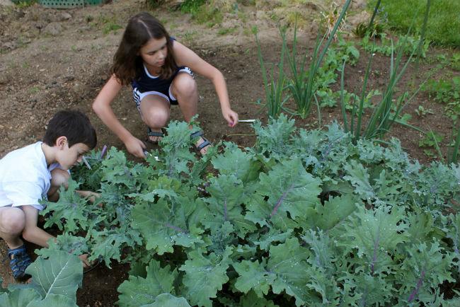 Siembra, cosecha, cocina y come. // Foto: Especial.
