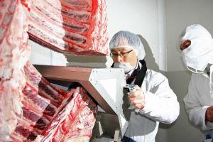 Antes de comenzar con el negocio, los empresarios aprendieron los protocolos de crianza y producción de la carne Wagyu en Japón. // Foto: Especial.