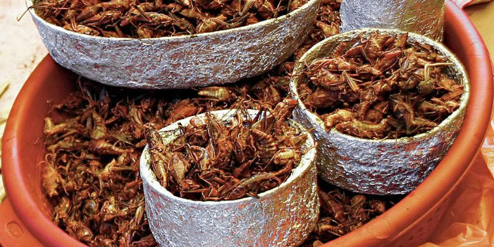 9d83b408ca2d4 El Mercado de San Juan  Las carnes exóticas de