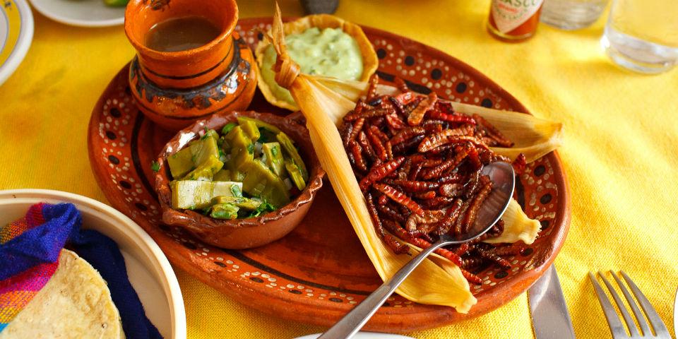 gusanos de maguey chinicuiles  insectos comestibles