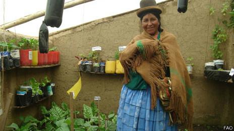 En El Alto hay cientos de invernaderos de adobe.