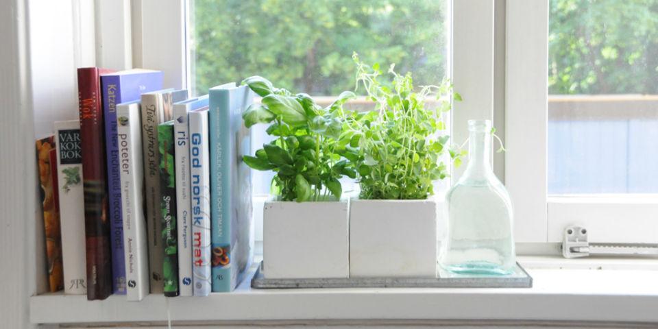 ¿Cómo cultivar tus hierbas de olor en casa?