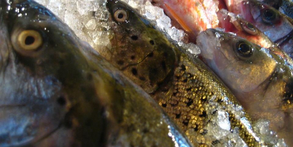¡Aprende a filetear un pescado (y a elegir el más fresco)!