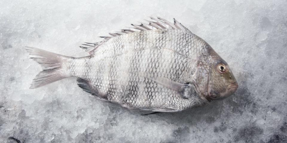 recetas con pescados de temporada