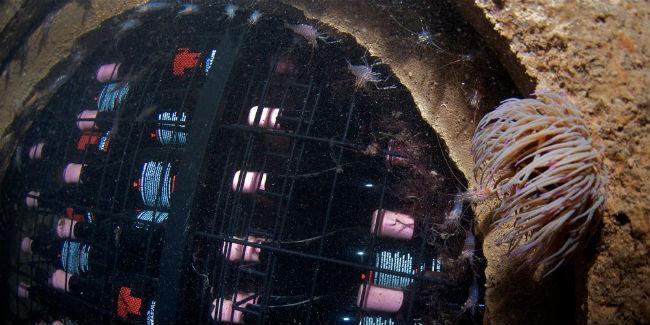 Durante su añejamiento en el mar, además de estar en contacto con el agua, los vinos conviven con especies marinas. // Foto: Vinos Crusoe Treasure (Facebook)