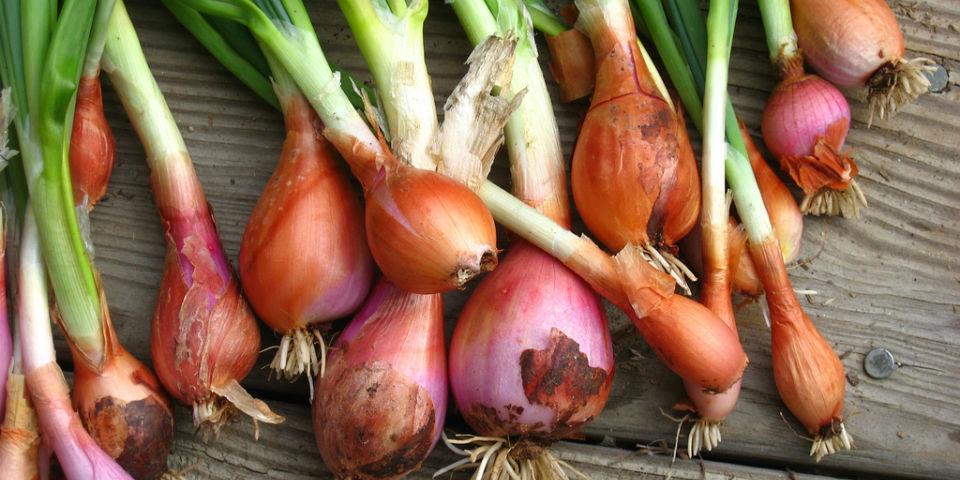 Los 5 alimentos que no debes refrigerar