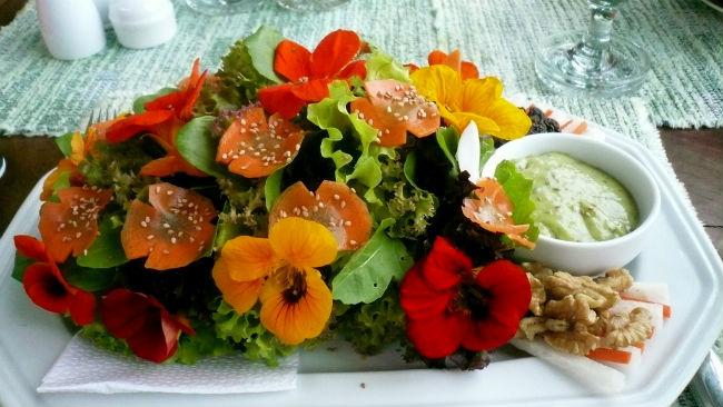 Del mastuerzo todo se come y las flores resultan muy lucidoras en cualquier ensalada. // Foto: Romel Sánchez (Creative Commons)