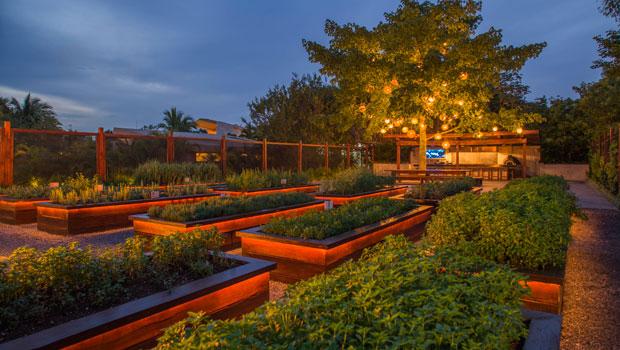 En el huerto de la cocina se cultivan una gran variedad de hierbas de olor y hortalizas. // Foto: Rosewood Mayakoba.