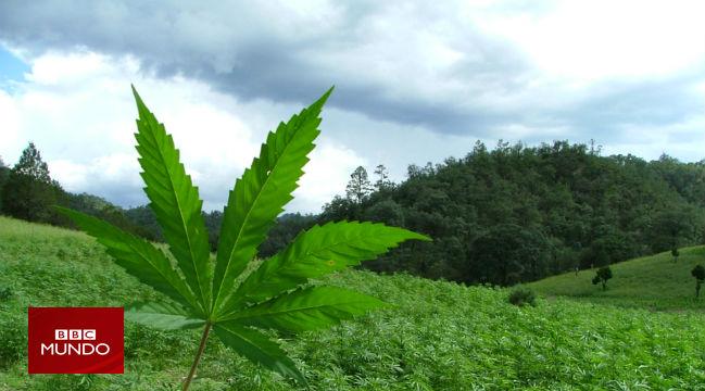 ¿Por qué da hambre después de fumar marihuana?