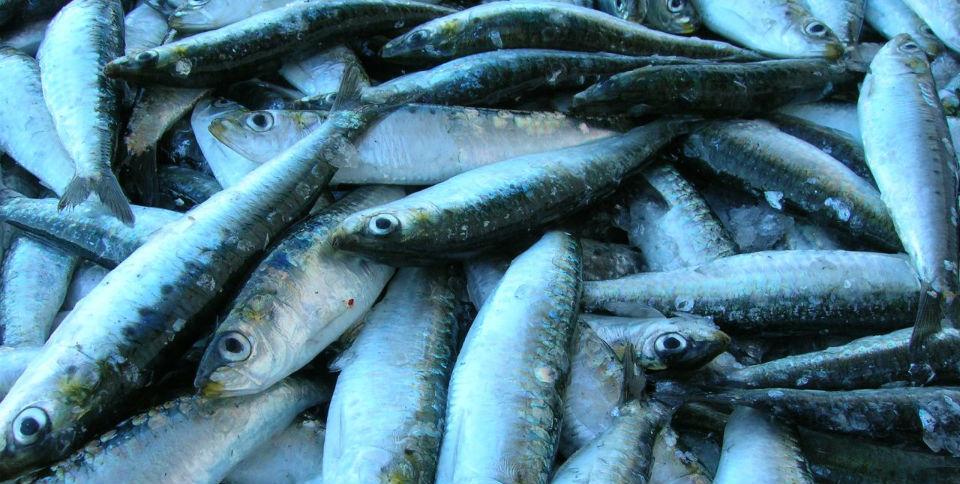pesca en pandemia