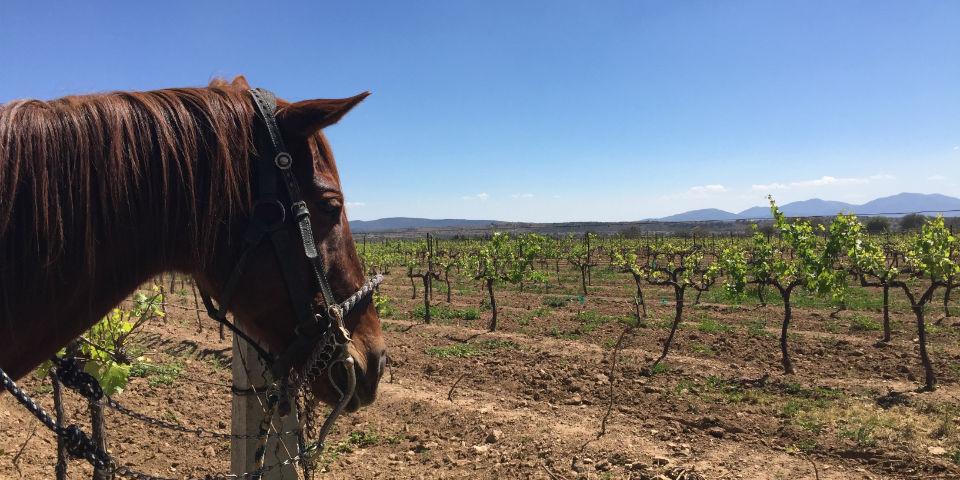 La industria del vino mexicano en números