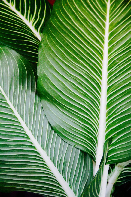 dar brillo a las hojas de plantas