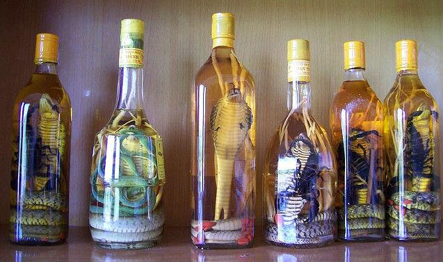 snake wine bebidas