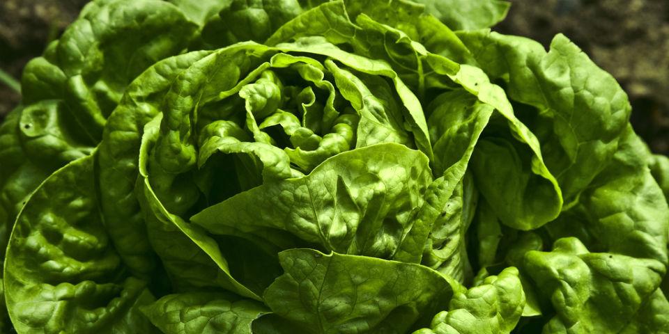 cómo almacenar los vegetales