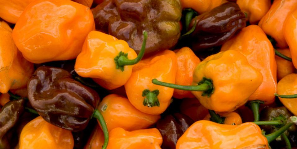 Cinco usos del habanero fuera de la cocina