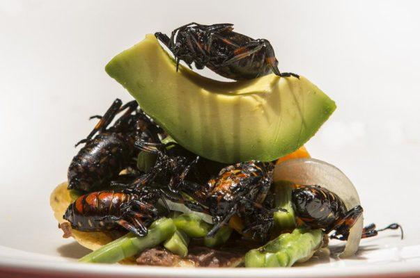 insectos mexicanos comer gusanos