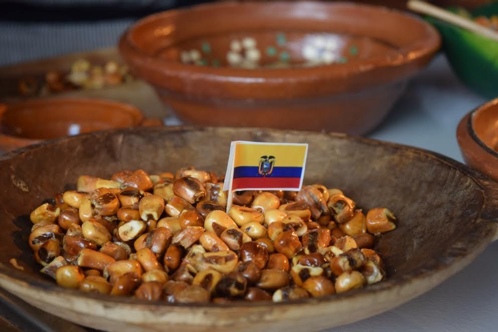 Chocho ecuatoriano. // Foto: Mayra Zepeda.