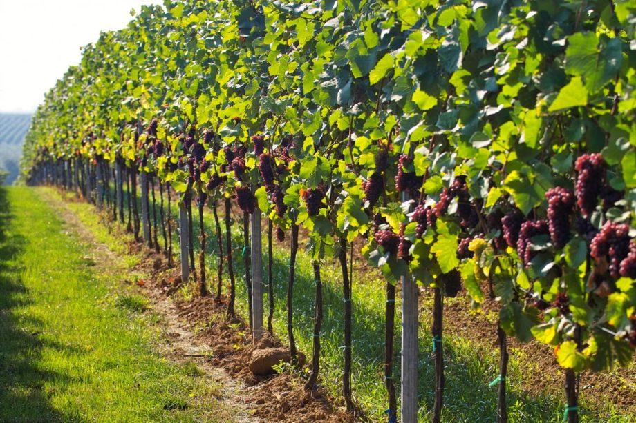 Un paseo por las joyas escondidas de los vinos franceses