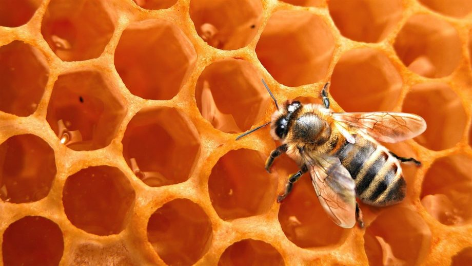La miel, uno de los ingredientes de Yucatán más importantes