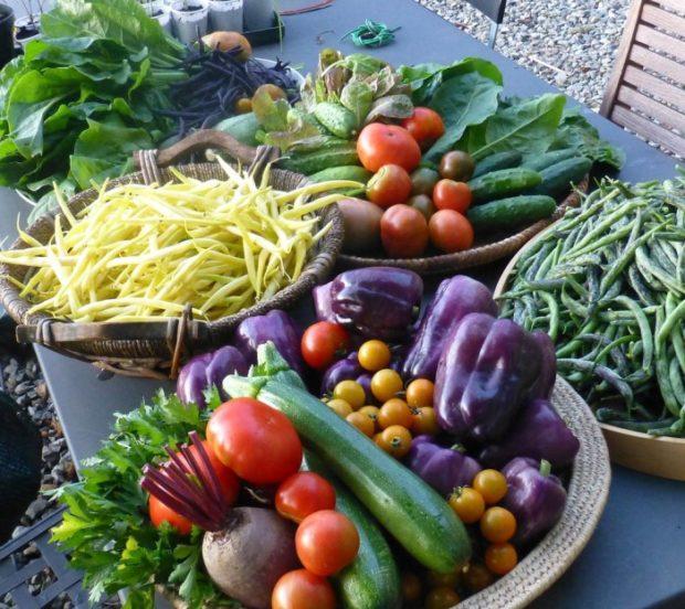 Una razón más para cambiar a una dieta basada en plantas
