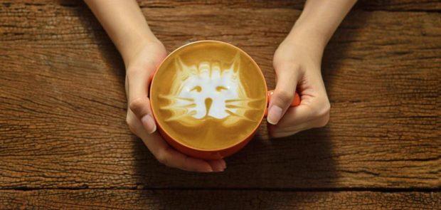 En este mundo hay gatos hasta en el café. Foto cortesía de Catfecito Condesa.