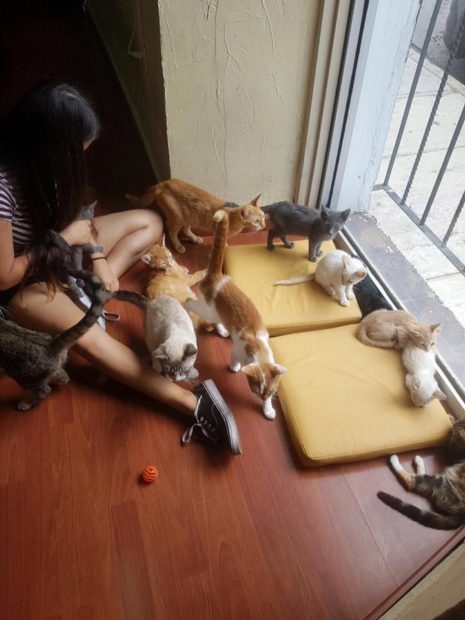 Si no tienes problema con sentarte en el suelo, éste es tu lugar. Foto cortesía de Meow Café.