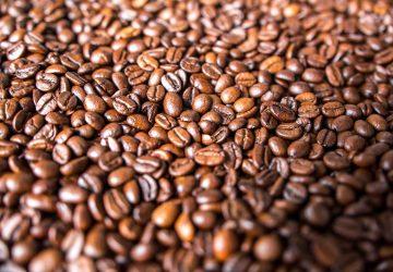 En la huasteca potosina los municipios productores de café son tres: Xilitla, Aquismón y Huehuetlán.