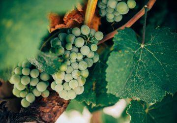 Conociendo el vino italiano de la mano del chef sommelier Marco Carboni de Sartoria y Bottega