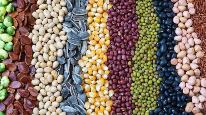 Semillas Comestibles De Frutas Y Plantas Que Debes Incluir En Tu Dieta