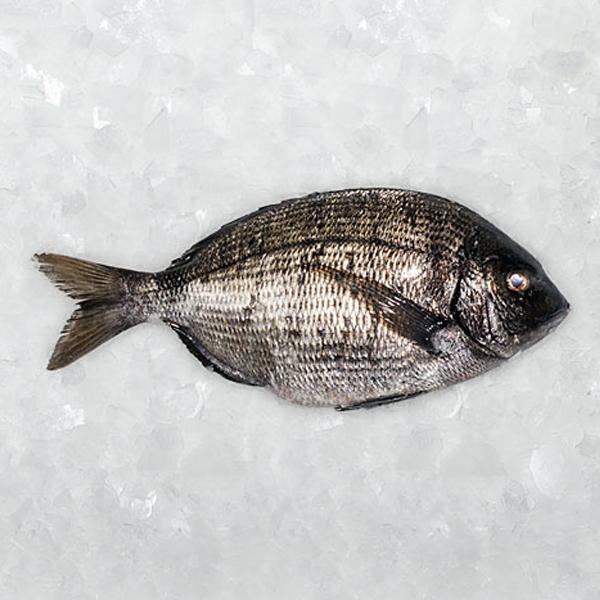 pescados cuaresma