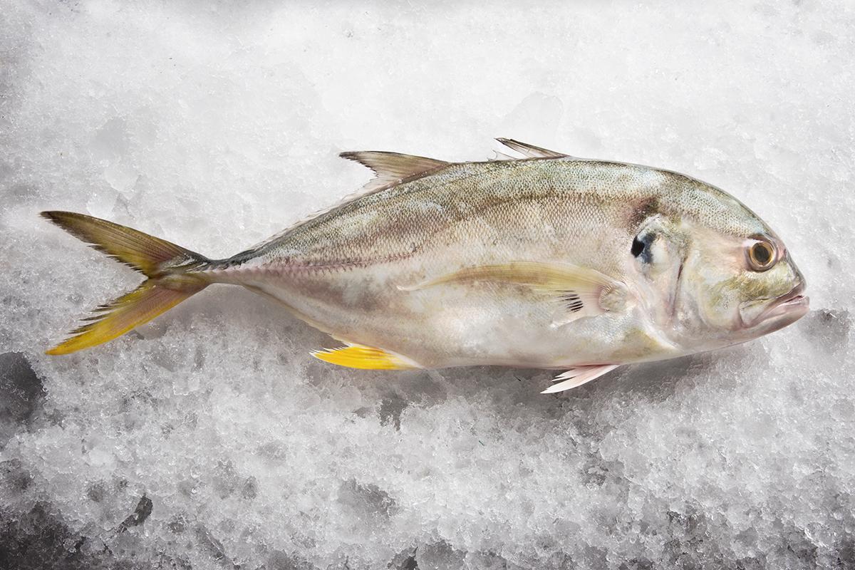pescados cuaresma jurel