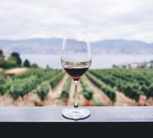 vino italiano chef sommelier marco carboni sartoria bottega