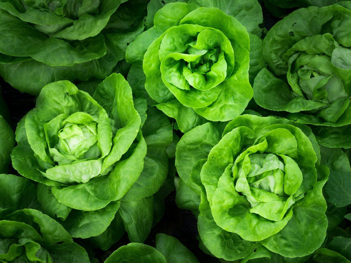 saber elegir vegetales frescos