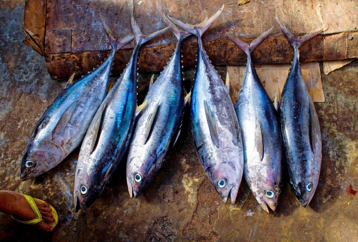 pescado bien cocinado