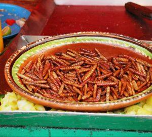 gusanos de maguey chinicuiles