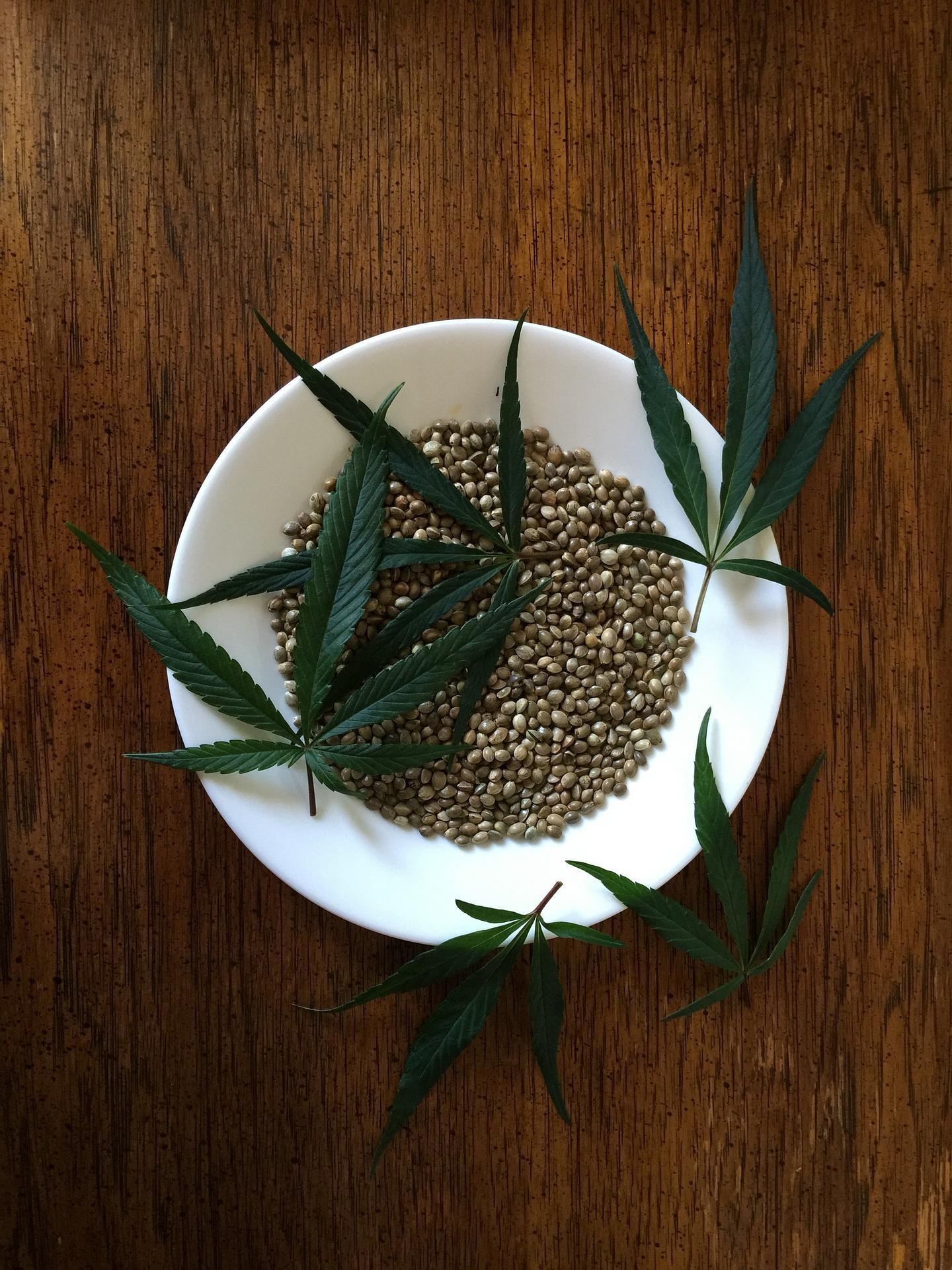 semillas de hemp para hacer cerveza con marihuana