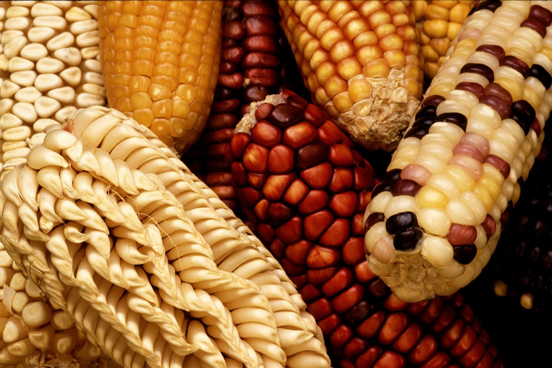 Gastronomía mexicana y gastronomía michoacana