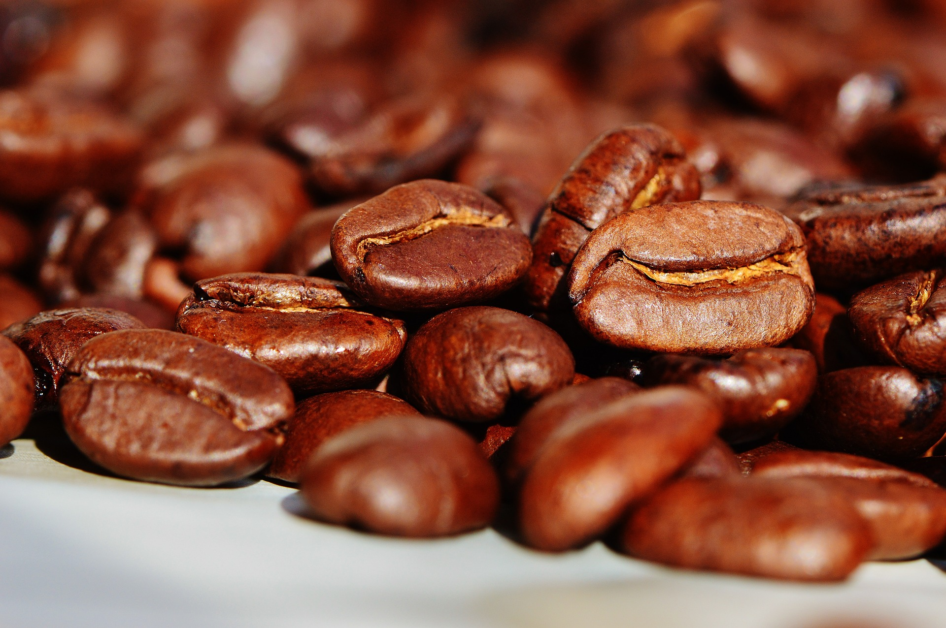 Café mexicano puede estar en peligro de extinción.