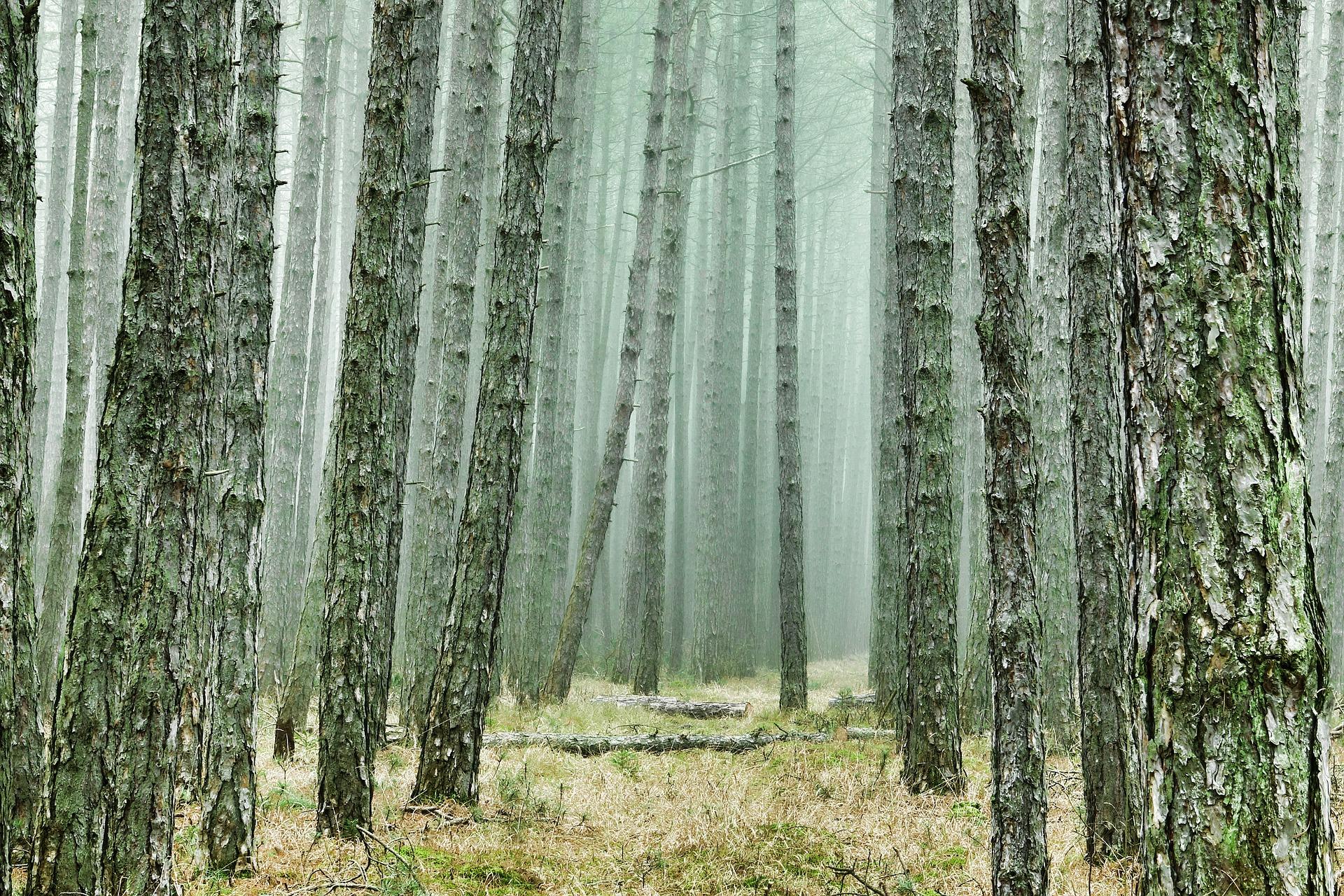 corteza y madera