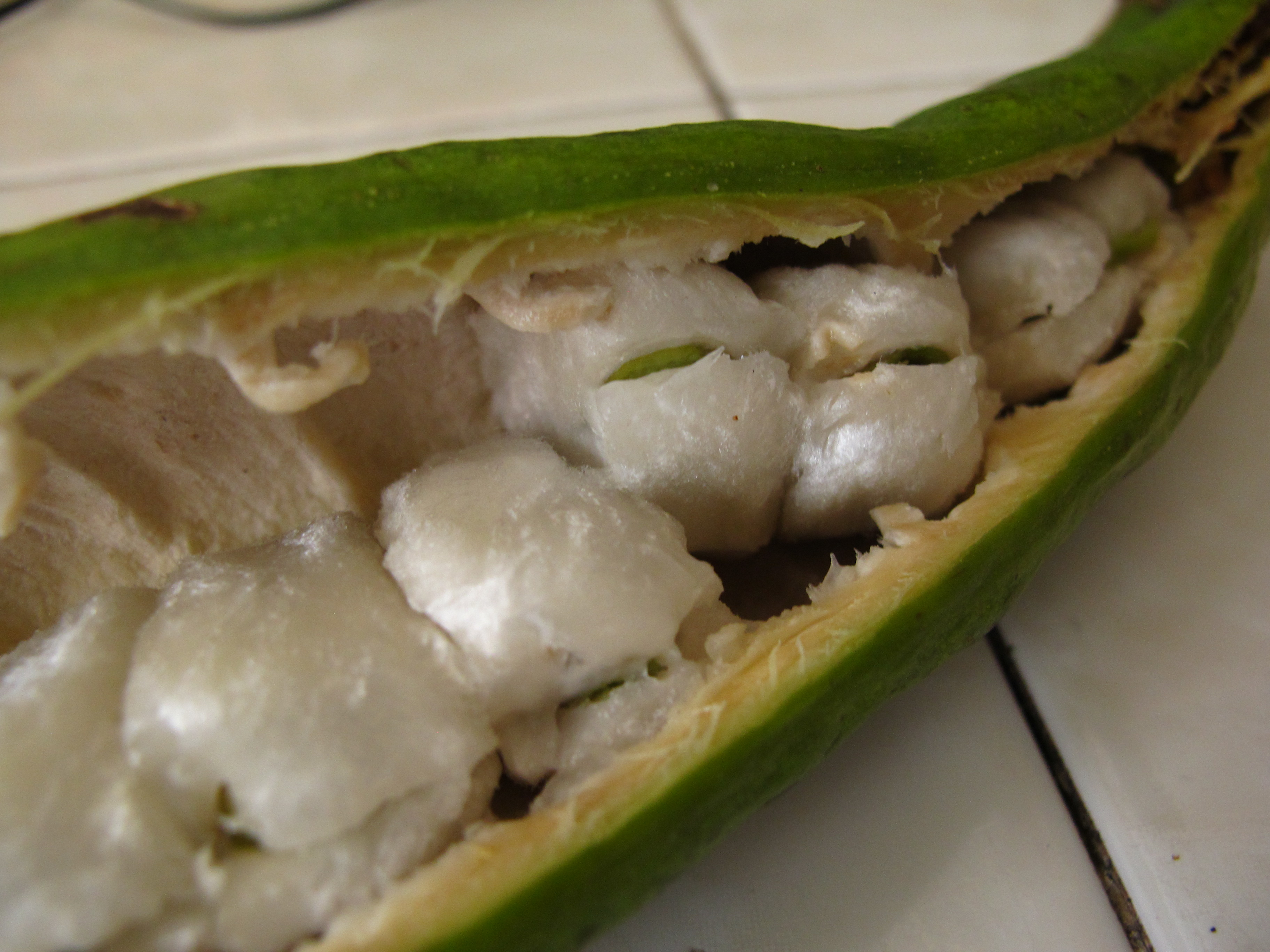 Frutas mexicanas, jinicuil