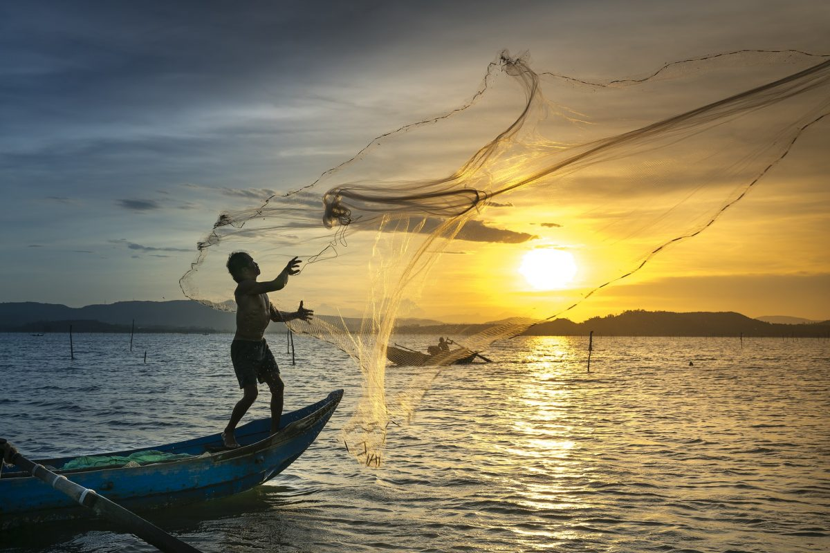 Pesca sustentable: mejores pescados y mariscos con smartfish