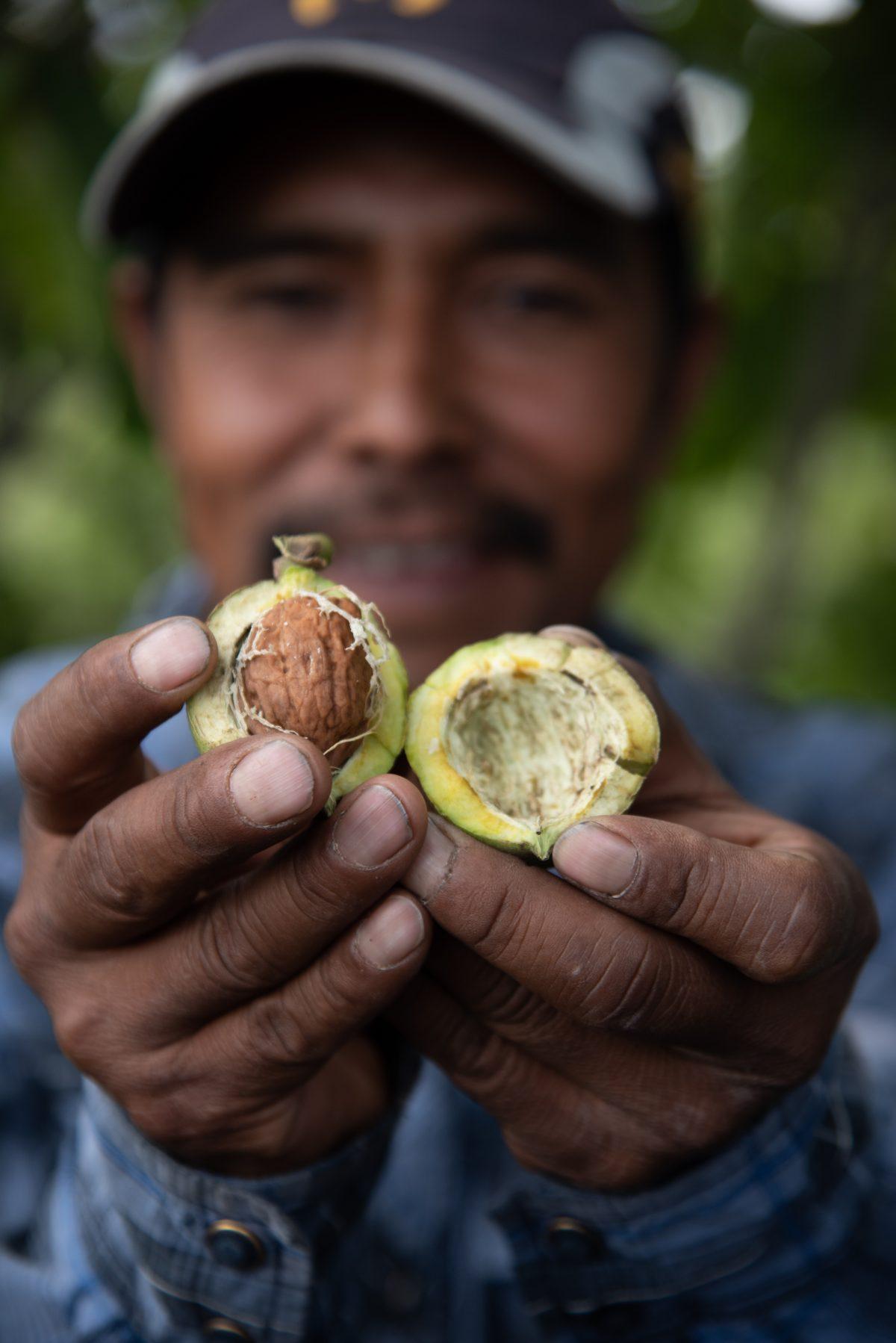 ingredientes tradicionales chiles en nogada