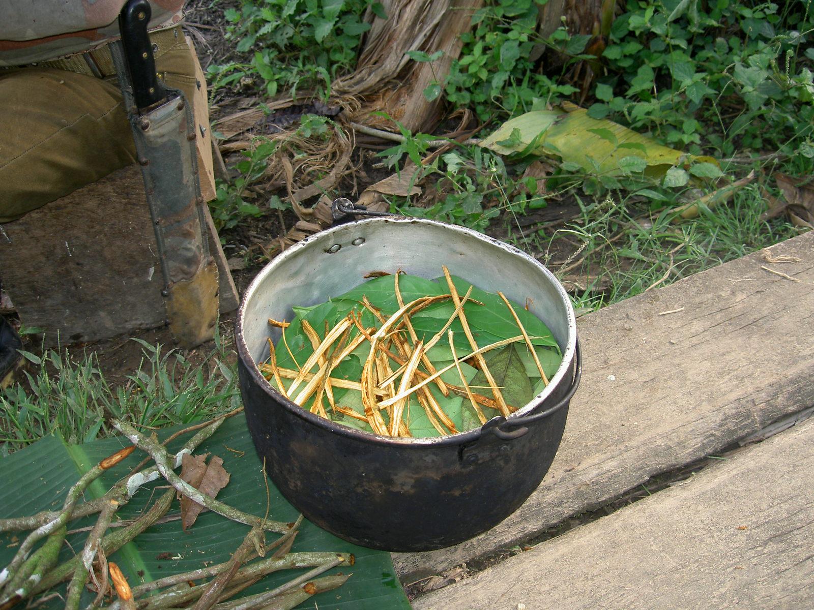 frutas endémicas selva amazónica amazonas
