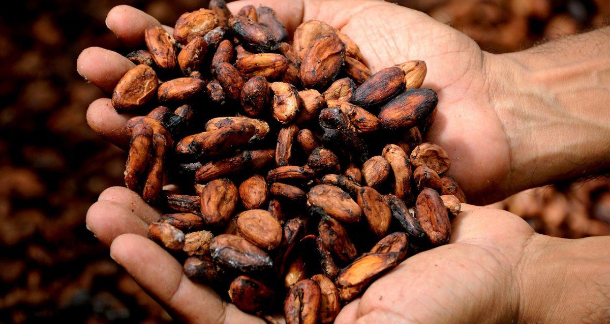 Del grano a la tablilla ¿Cómo es el proceso del cacao para ser chocolate Ruby?