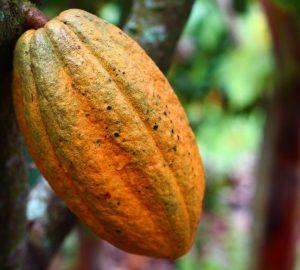 Museo del cacao Yucatán Choco Story
