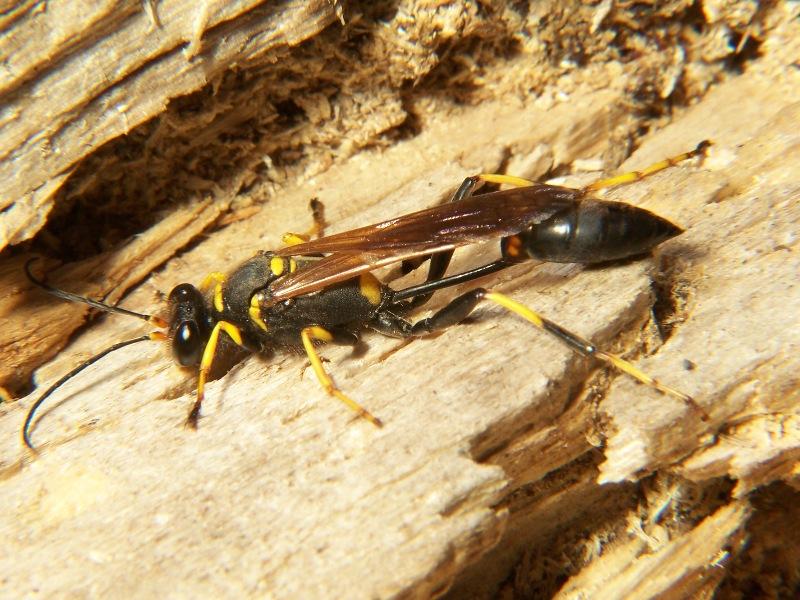 conoce diez insectos que se comen en México