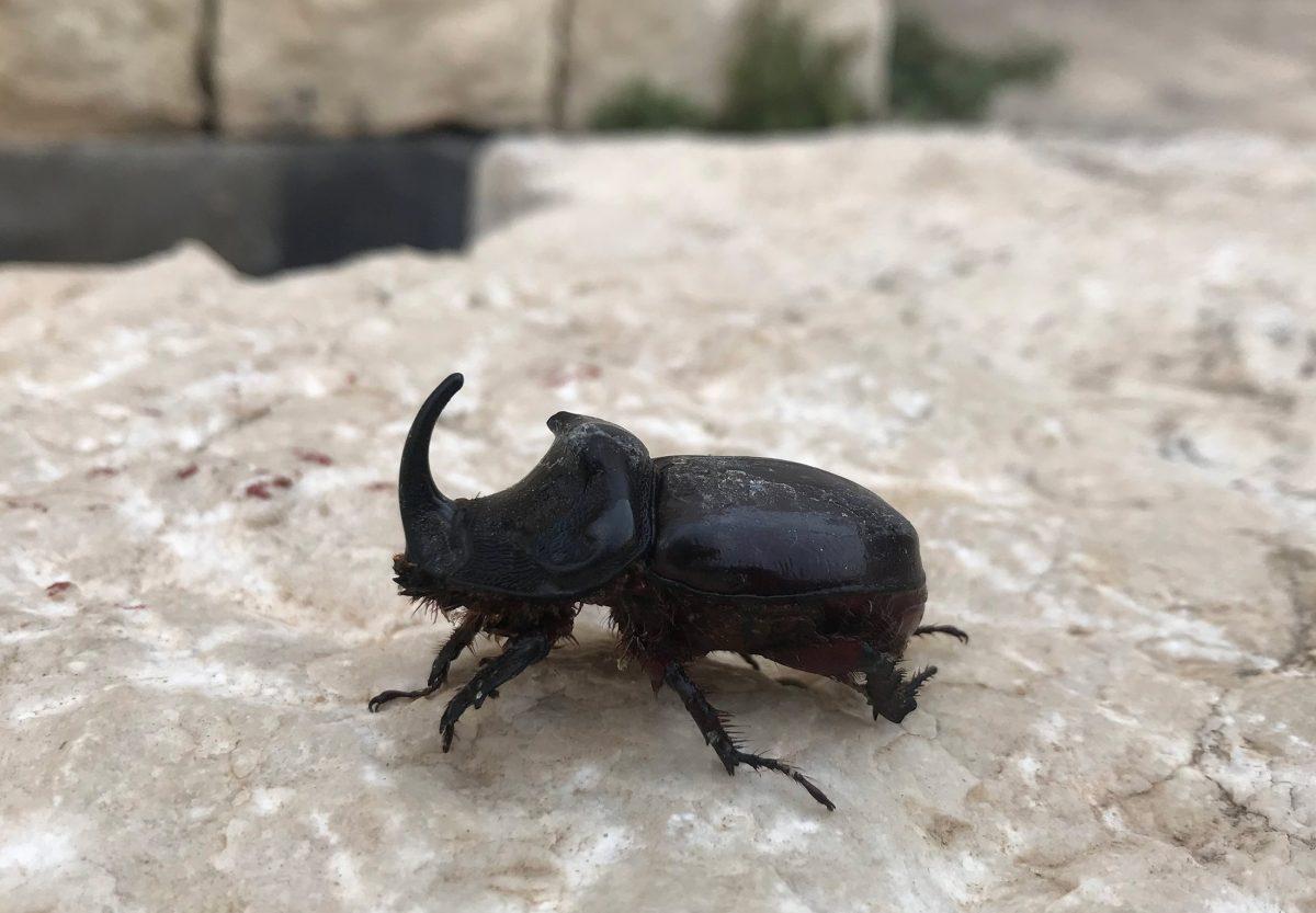 Más que chapulines y gusanos: diez insectos que se comen en México