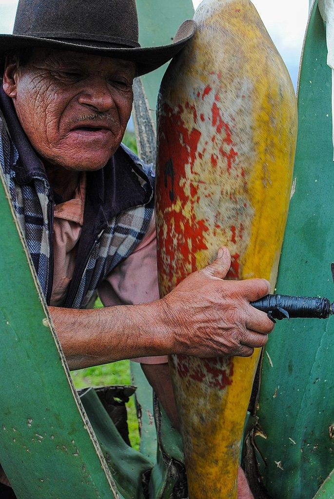 industria pulque